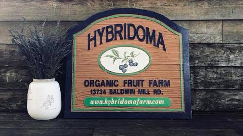 Hybridoma Farms